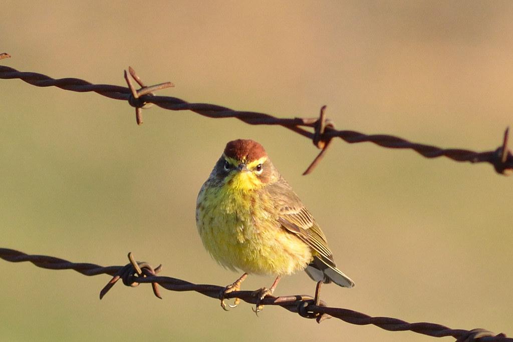 Bird DSC 3225