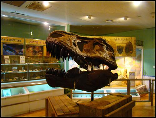 Cabeza Tiranosaurio Rex