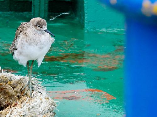 Bird on ferry