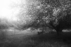 Morning shine (SolsticeSol) Tags: morning trees light bw monochrome wheel rural vintage wagon landscape morninglight spring soft quiet michigan