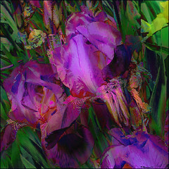 Purple Iris (Tim Noonan) Tags: iris colour art digital photoshop tim petals purple drawing vivid manipulation explore imagination shining hypothetical tistheseason okeeffe digi vividimagination shockofthenew sotn sharingart maxfudge awardtree maxfudgeexcellence maxfudgeawardandexcellencegroup daarklands trolledproud magiktroll sbfmasterpiece exoticimage digitalartscene sbfgrandmaster netartii donnasmagicalpix digitalartscenepro
