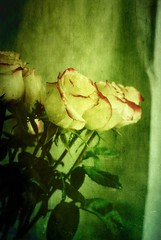 ... (~Jeannine~) Tags: flowers roses white texture ie flowerotica magicunicornverybest magicunicornmasterpiece arttex