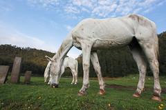 Giant Horses (Axayacatl) Tags: horse white blanco de mexico caballo 5d jae morelos lagunas zempoala estadodemexico