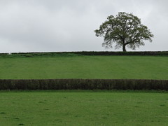 Saturday Mornng (ART NAHPRO) Tags: life tree field rural sussex spring country meadow farmland hedge april 2014