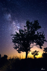 Tree of Hope (Vicente Romero Photography) Tags: milkyway vialactea longexposure stars estrellas arbol tree