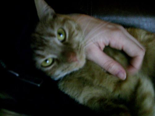 cuddly clementine.