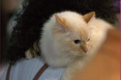 DSC_0186 (Francesco_Fontana) Tags: cat kat chat gato katze mace  macska gatto  con kot gat koka kedi kass katt kissa kttur maka kucing pusa mo   kat     pisic  qattus   kais