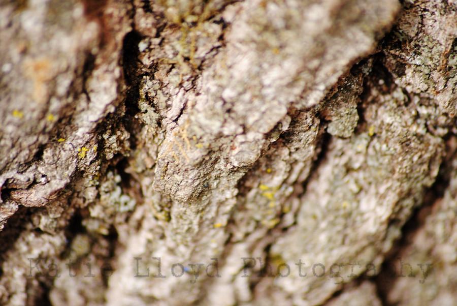 Tree Texture 3