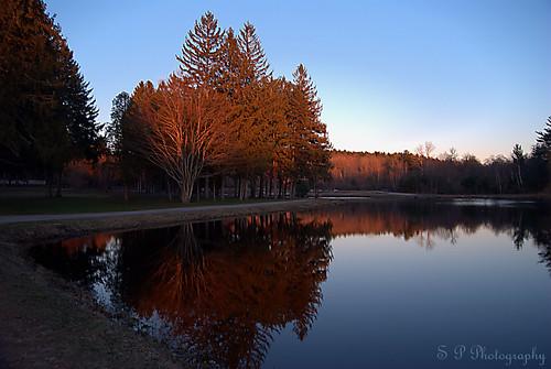 Swan Pond I