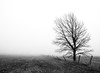 Solitaire (ICT_photo) Tags: morning mist tree bird field fence guelph foggy line ictphoto ianthomasguelphontario