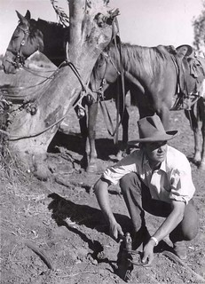 Jackeroo Peter Barry shoes his horse