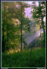 Rayons de soleil (Phil du Valois) Tags: landscape for soleil paysage forêt chantilly chablis lumire frondaison domaniale clairière taillis futaie hallier raoyn