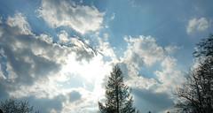 8. April 2011: Wolken (Gertraud-Magdalena) Tags: himmel wolken april bume baum frhling nadelbaum naturepeople nadelbume