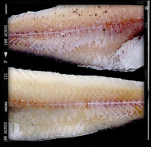 salt cod - Brandade de Morue
