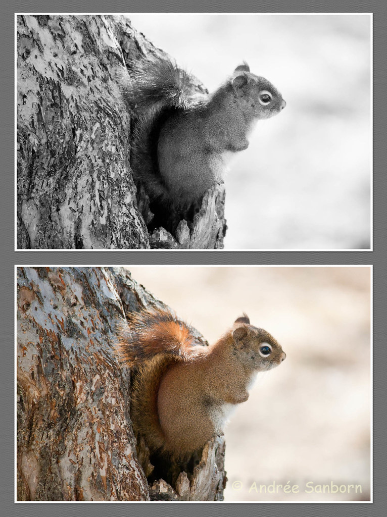 B&W Collage of Squirrels (2 of 1).jpg