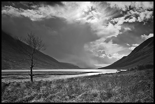Lone Tree - Glencoe Scotland