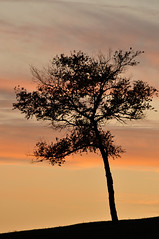 (StephenZacharias) Tags: sunset canada tree silhouette winnipeg manitoba 6396 stephenzacharias