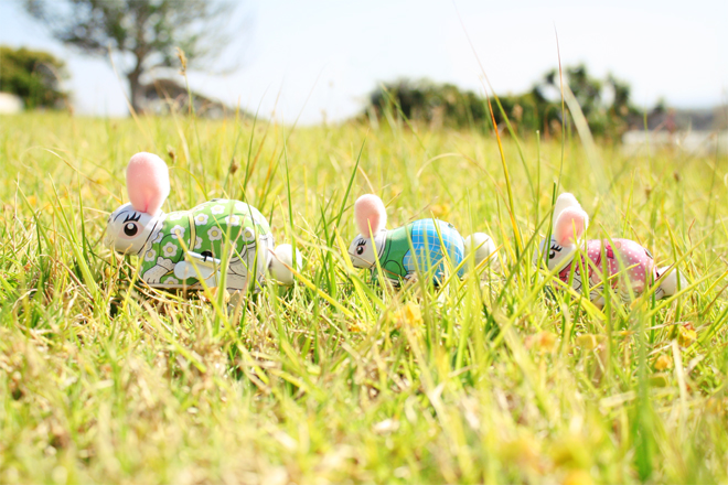 *Bunnies in the grass*