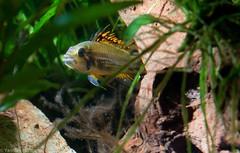 Aquarium 04_2011-6