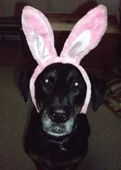 Lola_bunny_411b