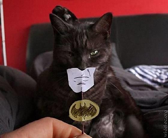 batman-fan114