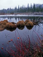 Old Seney Road Wetland (13Miles) Tags: reflections spring michigan wetlands wilderness upperpeninsula glap