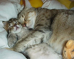 cute-cat-cuddling-kitten
