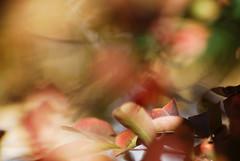 Los colores cambian. (Franco Rostan   Fotografa) Tags: new light sunset red summer sky sun color macro reflection tree verde green art textura love luz nature argentina colors yellow hojas photography luces photo rojo nikon colorado day foto tour photos bokeh earth top live dia colores explore amarillo reflejo contraste perspectiva 365 da nueva mundo placer fotgrafo franco sum earthday day112 day113 fishy brillo fotografa cmara d60 hcs hff llibre encuadre 2011 enfoque nitidez explored nikond60 nitido rostan francorostan fs110116