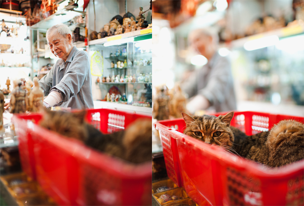 shop owner and his cat