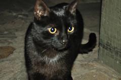 Feliz da Eli!!! (juannypg) Tags: argentina cat eli negro gato rosario michi mascota negri eliseo 29deabril dadelanimal