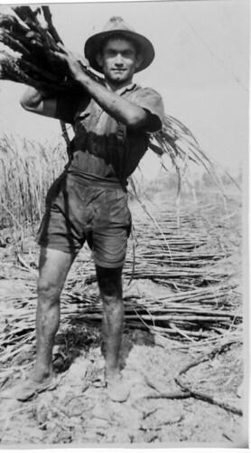 Sugarcane cutter