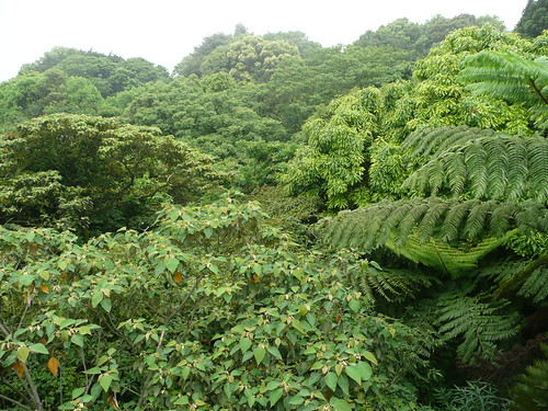 The Lush Vegetation