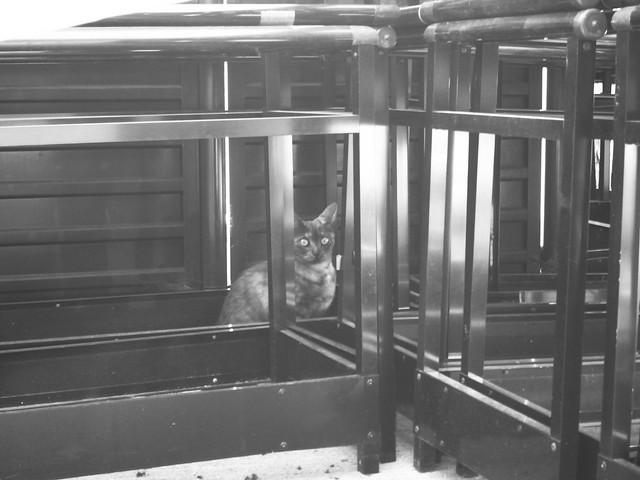 Today's Cat@2011-05-05