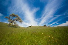 Big Sky in Spring (flopper) Tags: california sky cloud flower tree spring hill wildflower pachecostatepark theperfectphotographer