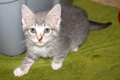 Iowa (Kurt Faler) Tags: rescue cats cat kitten earth kitty kittens center angels felines clinic neuter spay ffrc friendsoffelinesrescuecenter earthangelsspayneuterclinic easnc