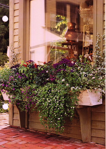 WindowBoxes_0001