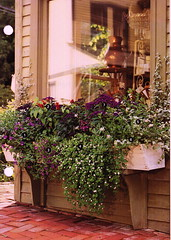 WindowBoxes_0001 (brightcd) Tags: window boxes