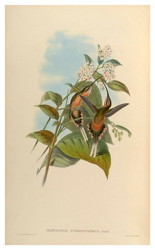 004-An introduction to the Trochilidae  or family of humming-birds-Vol 1- 1861-John Gould