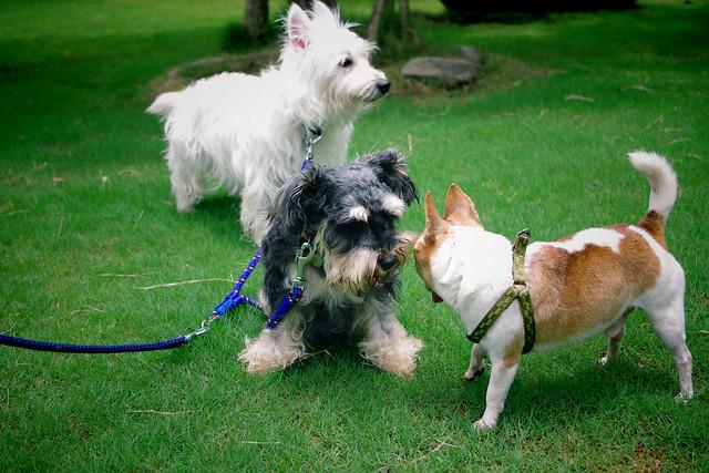 狗狗快樂出遊去