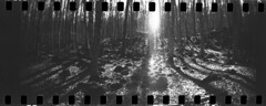 Carbón y ramas secas (sergiparra) Tags: film analog 35mm bn analogue developed negativo analogic analógico kentmere lafagedadenjorda sprocketrocket