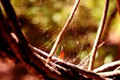 Day 139/365 (tu.do) Tags: spider bokeh web project365
