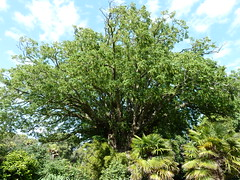"""Wing Nut Tree • <a style=""""font-size:0.8em;"""" href=""""http://www.flickr.com/photos/61957374@N08/5849721963/"""" target=""""_blank"""">View on Flickr</a>"""