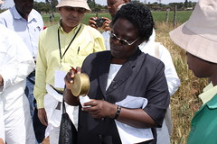 Ruth Wanyera demonstrates the collection of st...
