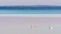 Calmness (karo.perez73) Tags: see lake ruhe schwan swan