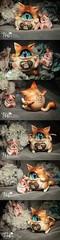 6ddb4c61gw1f1gobxvsx3j20m82h0qok () Tags: bjd cyclops kitten