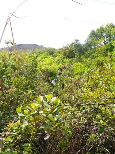28/03/2011 Kai Kung Leng Hike/Run