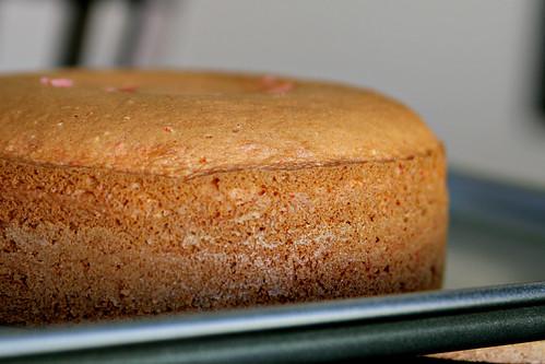 Cake Pop 5