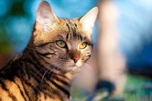 [フリー画像] 動物, 哺乳類, ネコ科, 猫・ネコ, 201104051100