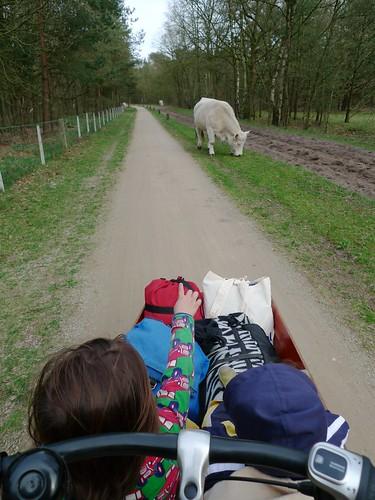 bakfiets-tour-lage vuursche-nl 12