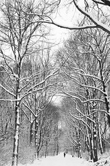 We won't have to be lonesome (Christian DF) Tags: trees winter bw naturaleza white snow cold berlin blanco nature forest germany deutschland rboles natural walk nieve bn paseo sp bosque solo alemania invierno fro solitario cdf suenyospolares sueospolares aone christiandf christiandfes christiandomnguez